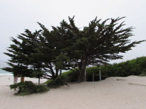 Carmel by the Sea Beautiful