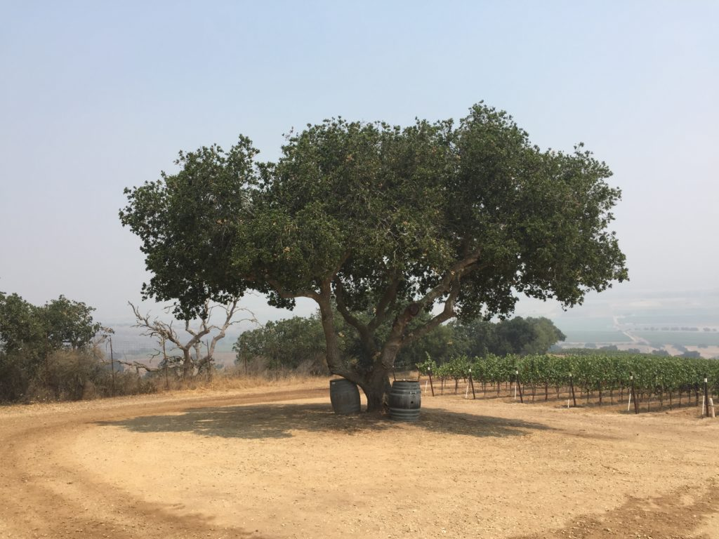 Lone Oak Hahn Santa Lucia Highlands