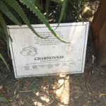 Chardonnay Napa California