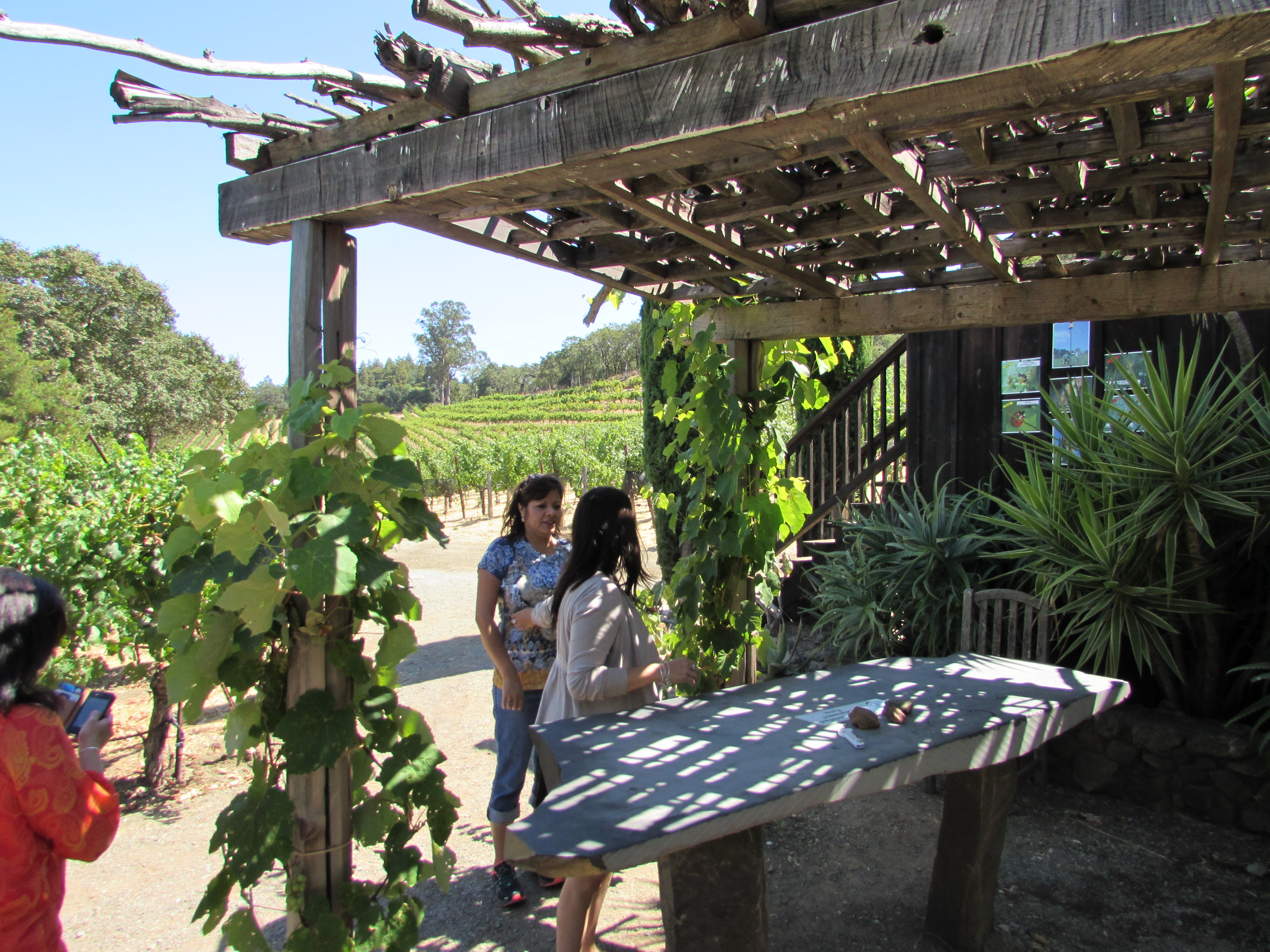 Wine Tasting in the vineyards in Napa California Benziger